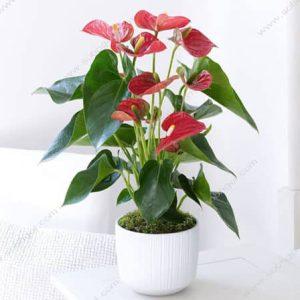 خرید گلدان هدیه