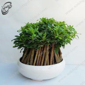 خرید گل آنلاین – بونسای پیتسپروم طرح B-040 ( ارسال گل رایگان )
