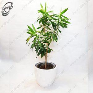 سفارش گل آنلاین – دراسنا طرح D-022 ( ارسال گل رایگان )